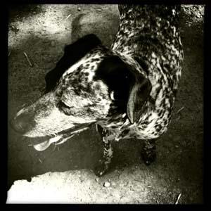 Dogb&w